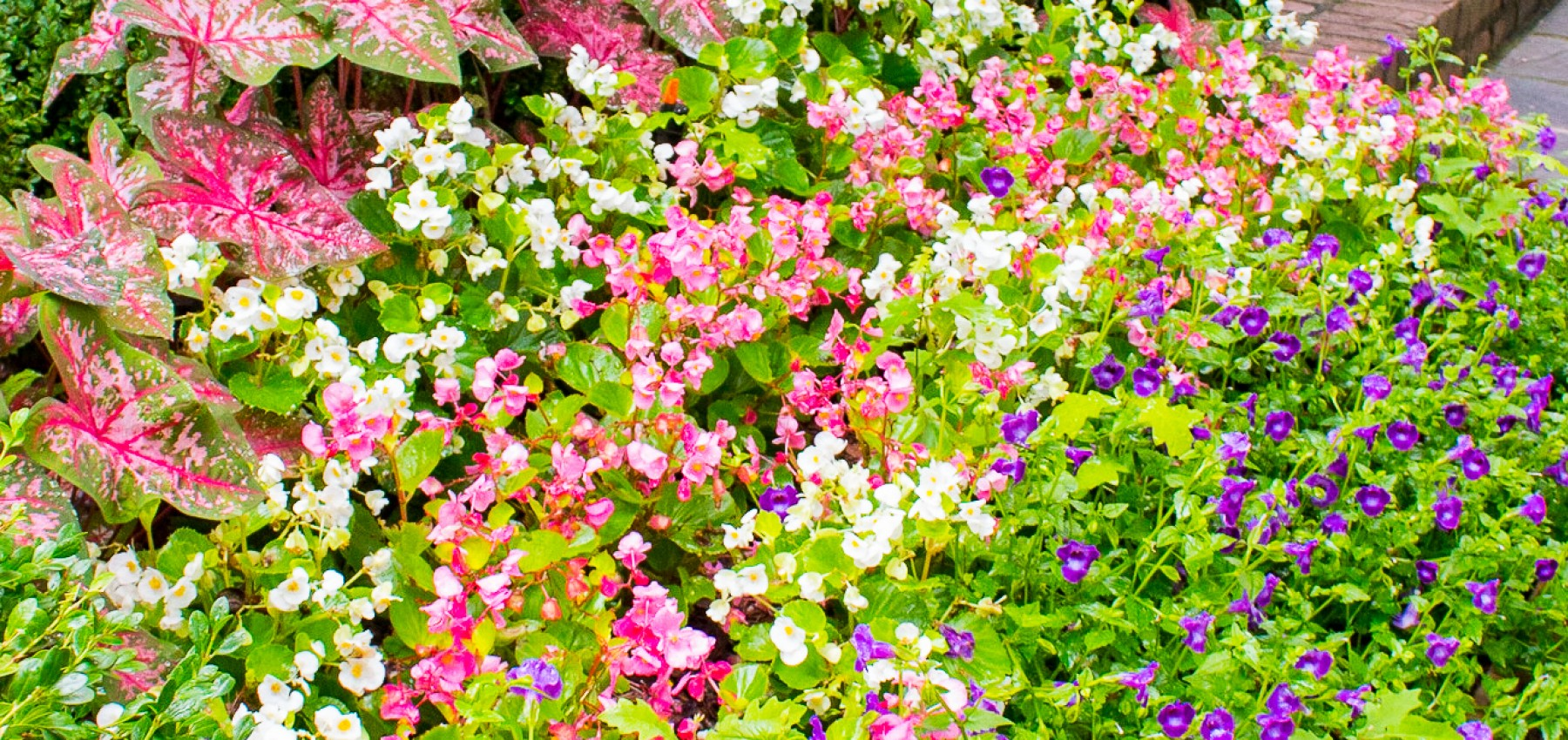 5 rules for planting your spring annuals izmirmasajfo