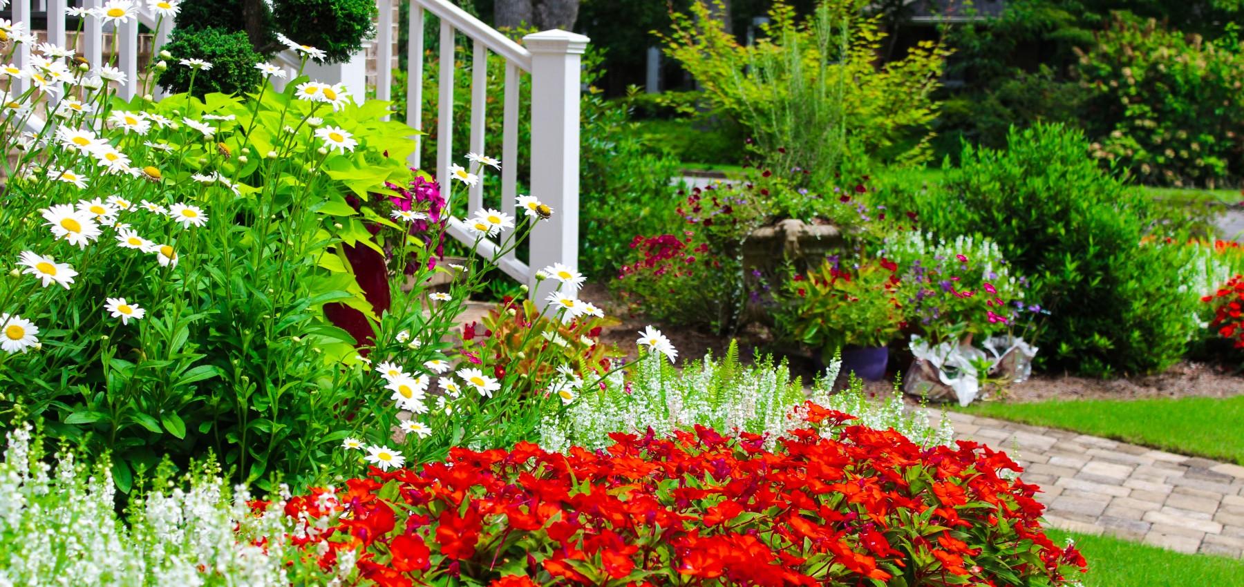 Eco Friendly Landscapes Native Plants And Pollinators